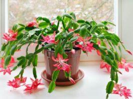 Они даже ночью выделяют кислород.. 9 растений, которые хорошо иметь в спальне