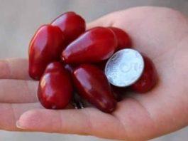 7 ягод кизила спасут ноги от вздутия вен и отечности, если съедать их вместе с косточками