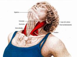 Упражнения для шеи: Они освобождают от зажимов и нормализуют давление
